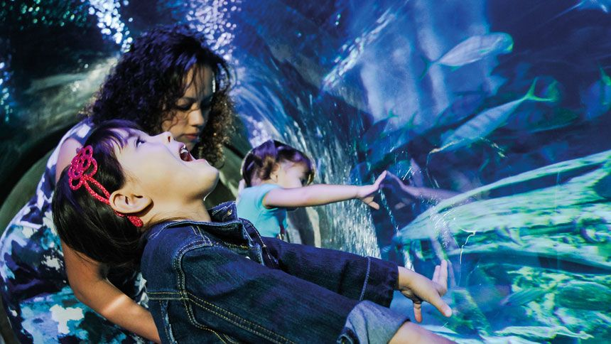 SEA LIFE London. Huge savings for Teachers