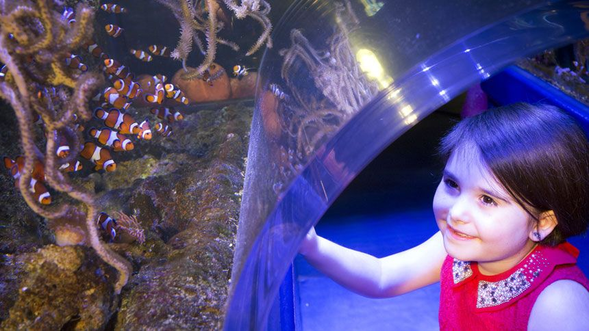 SEA LIFE Birmingham - Huge savings for Teachers