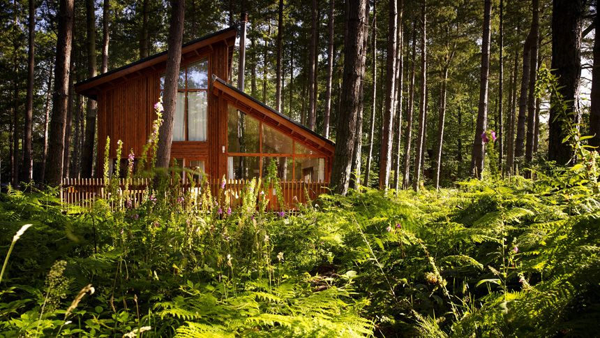 Luxury Woodland Lodges. Up to 15% Teachers discount