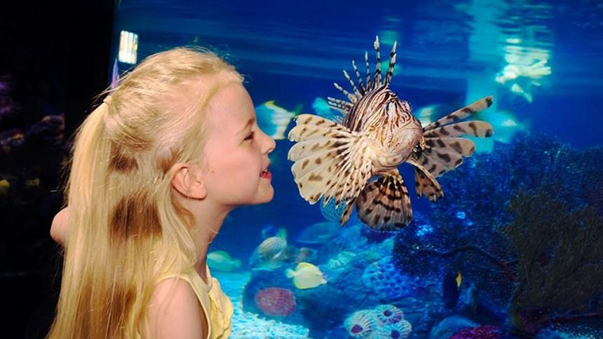SEA LIFE Great Yarmouth - Huge savings for Teachers