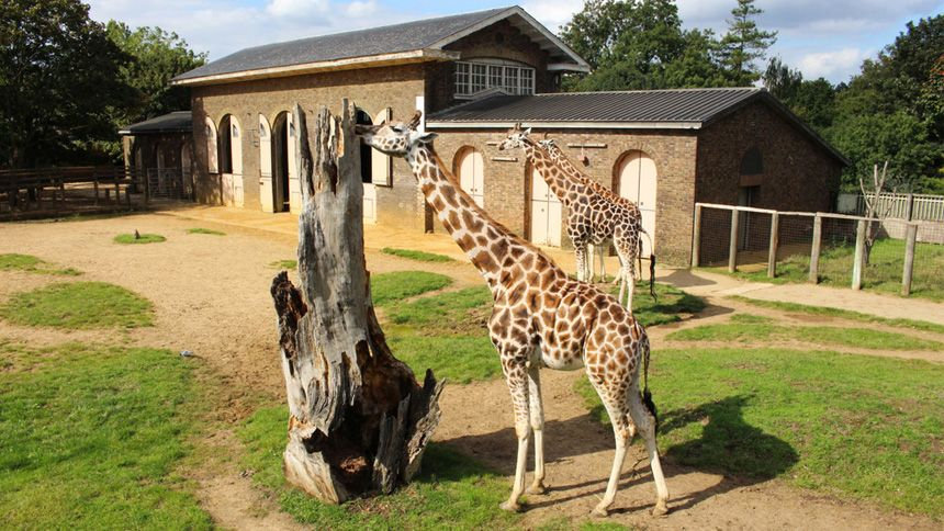 Zoos & Wildlife Parks UK with Hotel. 10% Teachers discount