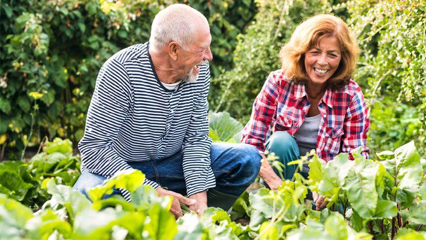 YouGarden Online Garden Centre - 12% exclusive Teachers discount