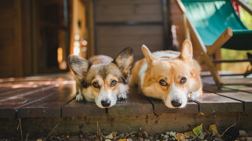 Dog Friendly Holiday Cottages - Exclusive £40 Teachers discount